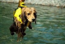 Dog Stuff / by Linda Ward