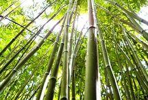 Bambusz - nem csak sminktermékeink csomagolása