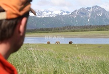 Wild Bears - Visit The Kenai / The Kenai offers many fly-out services will take you WILD BEARS.