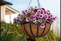 Hanging Baskets / No space in your backyard to cultivate some beautiful flowers? We can help fix that, with hanging baskets! Not only do colorful flowers look especially bold when suspended, gardening ideas will sprout once you begin the process of planting!