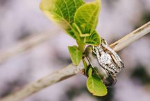 Wedding Rings / Inspiration for stunning wedding rings