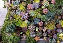 Simple Gardening / by Tammy Lynn