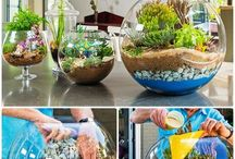 Plants for Home Ideas