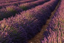 Provence ♡