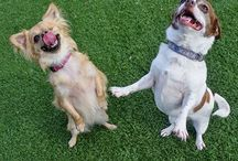 Blog Dogs! / The sometimes snarky, always upbeat adoptable pooches of HSSV's dog blog.