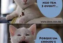 Memes do Gato