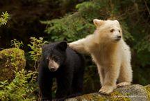Bears  / by Cindy Redden