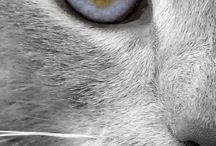 Gözler:)♥♥