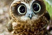 Eulen | Owls | Les chouettes / Wenn im Tierreich Tiere Tieren zum Geburtstag gratulieren, sagt die Eule zum Uhu:  Happy birthday to youhou!   | www.Grusskartenkaufen.de
