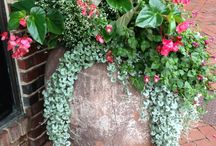 Interior decorating outdoor with plants - Vihersisustus ulkona