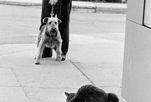 airedale plus beau chien du monde.