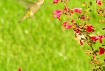 birds & flowers  / by Kate Bohot
