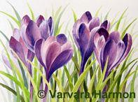 Akvarel blomster