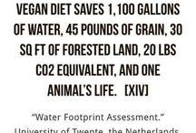 Vegan // Quotes