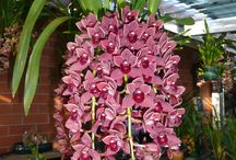 Beautiful Orchids!! / by Jessica vasquez
