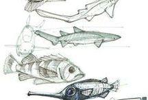 Peces / Diseños y bocetos para la creación de graffitis de peces.