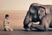 Interspecies(: / by Sierra Hawksley Ⓥ