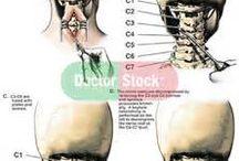 zona leher