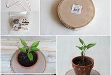 DIY Plants / Construcciones de bricolaje relacionadas con plantas!!