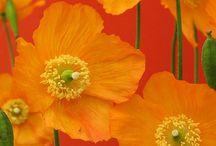 ~Summers Orange~ / by Lisa