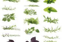 Herbatka  Teas Herbal teas