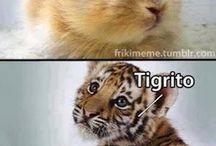 memes animales