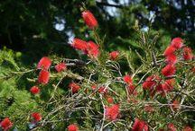 Pflanzen winterhaft