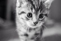 professional photography (animals)