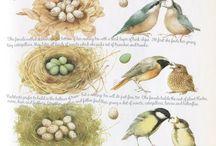 ilustracje ptaków