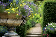 My Dream Garden / by Rebekah Warren