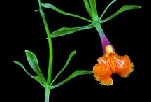 Orchideje a květiny