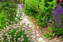 Jardin, potager, extérieur