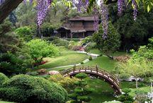 Japanske hager