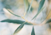 Organic Olive   Wedding Inspiration / South Africa boasts an array of the most beautiful olive tree farms. Olive, both the colour and the plant, can be incorporated into your big way in a number of ways, and so today we are inspiring our readers with an organic olive wedding theme.  The silver-green color of the leaves flawlessly blends with creams, browns, blues and even with blush! Think out of the box with lengthy olive branch table runners or delightful DIY olive oil wedding favours. The possibilities are endless!