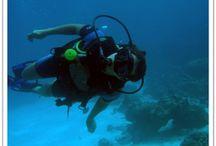 Activities / Entre terre et mer, vous ne vous ennuierez pas une seule minute avec les nombreuses activités du Lodge