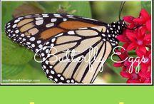 Butterflies and Humming Birds