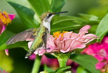 Attracting butterflies and hummingbirds to the garden / (Includes ideas for attracting  songbirds)