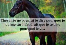 'citations' chevaux