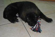 Cucciolo  / Un piccolo cucciolo di cane dolcissimo
