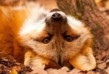 Má liška