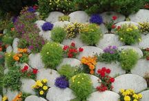 Garden Ideas / by Jenn Scott