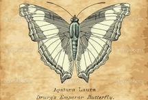 Butterflies / by Lizabeth Larson
