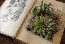 Cactus plants for decor