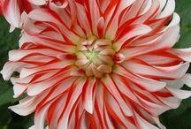 Цветы. Растения