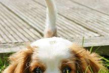 Doggopower