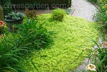 gardening -- ground covers / by olive14