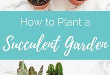 Perfect Plant Ideas