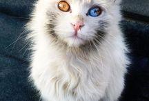 동물-고양이