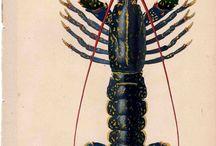 Crustaceans illustration