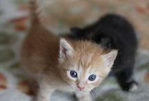 Kittens ❤
